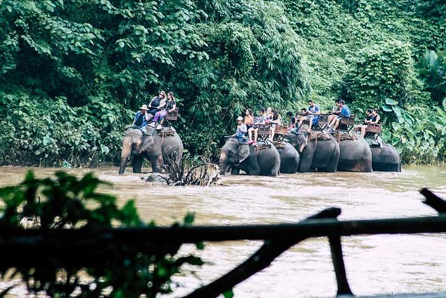 Paseo en elefantes