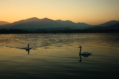 swan lake batca doamnei