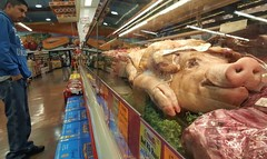 #vallartasupermarket #pig #pigforsale #puerco #piggy #puerquito