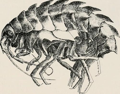 """Image from page 156 of """"Deuxième expédition antarctique francaise (1908-1910)"""" ([1911-)"""