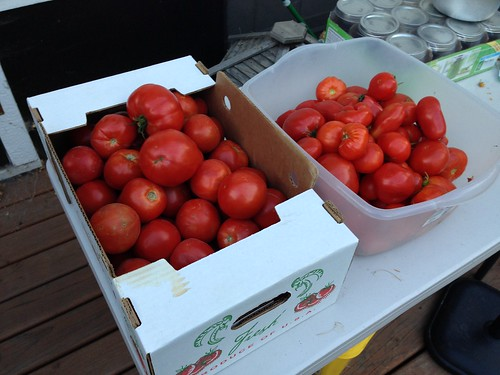 41 pounds of tomatoes harvested today.