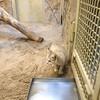 Heute im #Zoo-#Berlin: #Sandkatze #zooberlin by oomenberlin