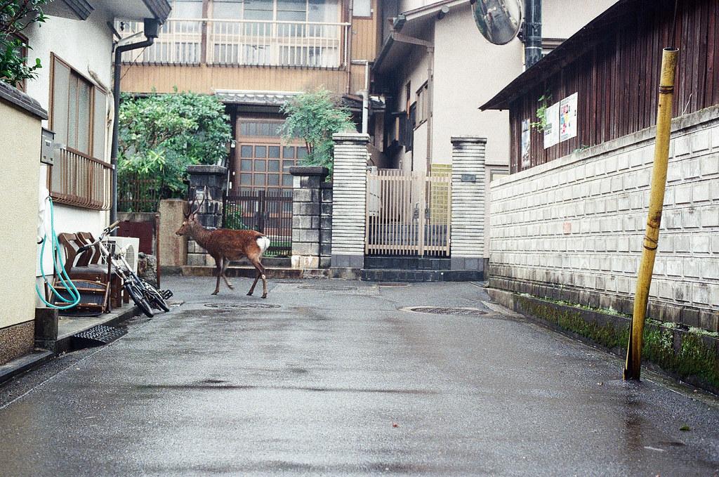 鹿 嚴島(Itsuku-shima)広島 Hiroshima 2015/08/31 最後轉角離開。  Nikon FM2 / 50mm Kodak UltraMax ISO400 Photo by Toomore