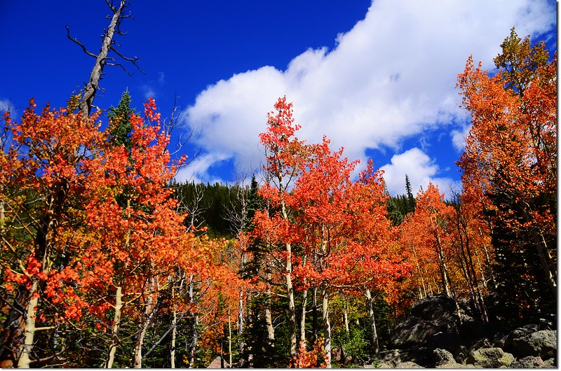 2015 Rockies in Fall, Bear Lake Area (26)
