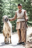 The Big Himalayan Goat and the Shepherd from Himachal Pradesh