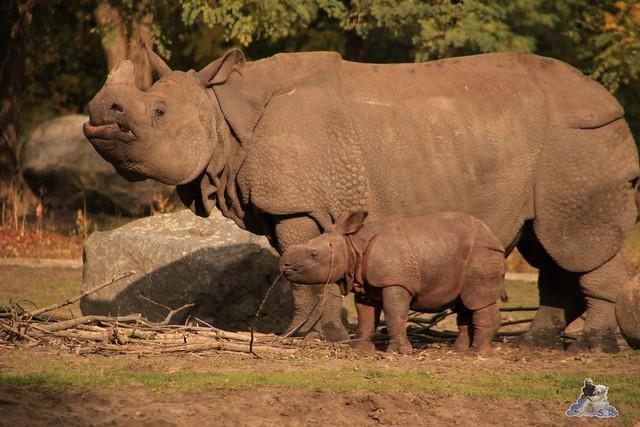 Tierpark Berlin 18.10.2015  0161