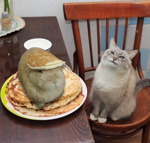 murphcakes.jpg
