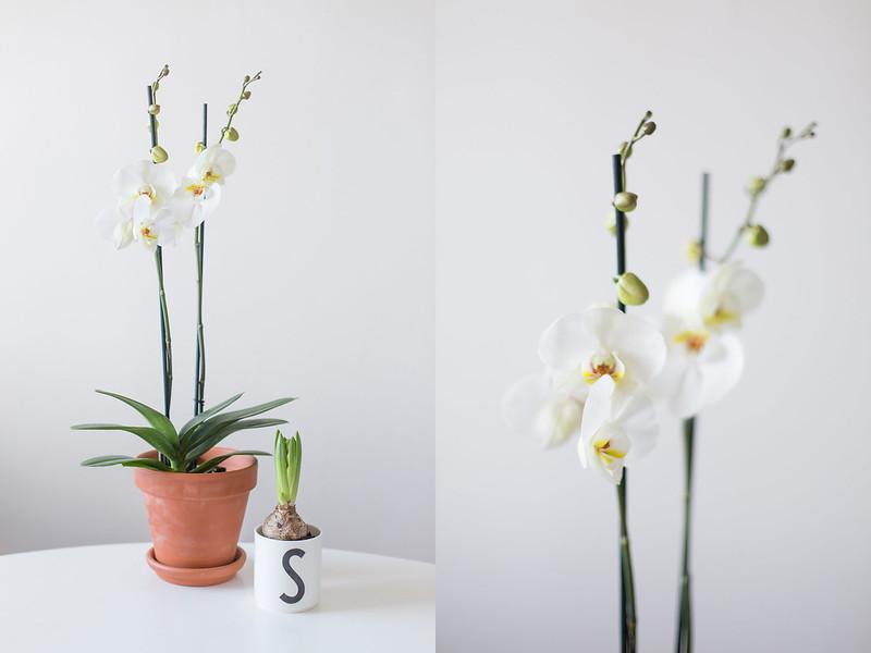 sovrumshyllan och nya växter
