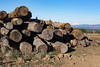 Wood Pile and Mount St. Helens on Powell Butte