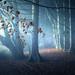 Treemendeous light by @hipydeus