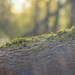 Moss by MrStefaan