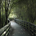 Walkway Through the Trees by stevedewey2000