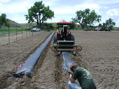 BLM Wyoming and Partners Grow Seed at Welch Ranch