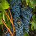 Clusters of Grapes by tom911r7