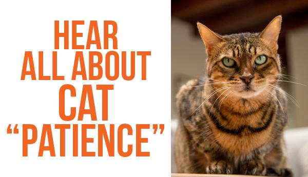cat-slang-patience