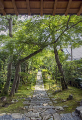 Ryoanji (龍安寺) path
