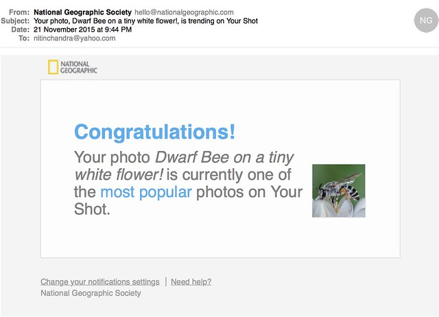 Your photo Dwarf Bee on a tiny white flower is trending on Your Shot