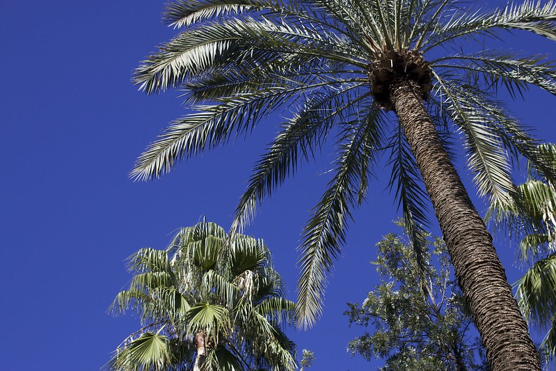palm-trees-jardin-marjorelle-travel-blogger