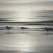 Sanibel Island Beach Birds by Ken Lane Photography