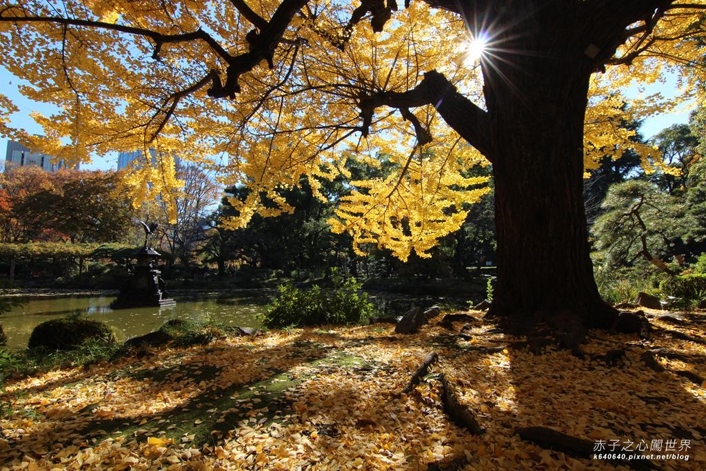 東京賞楓-日比谷公園08