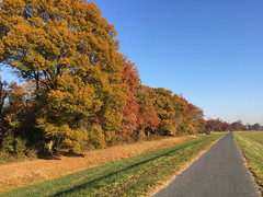 Northeast Branch Trail in Autumn