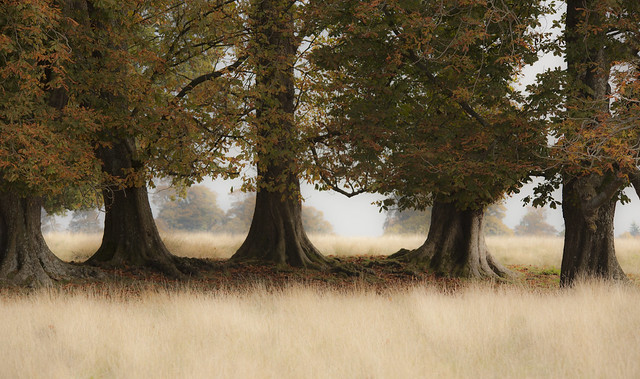 the line of trees, Canon EOS 5D MARK II, Sigma 150-500mm f/5-6.3 APO DG OS HSM