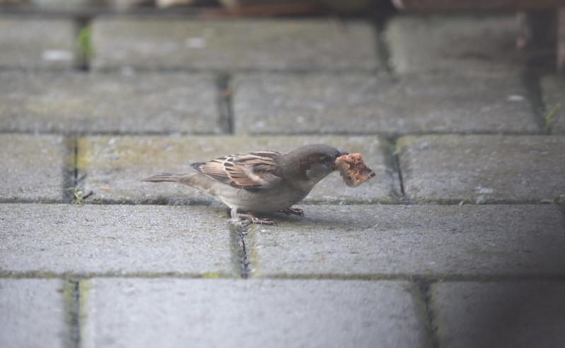 Sparrows 22.11 (10)