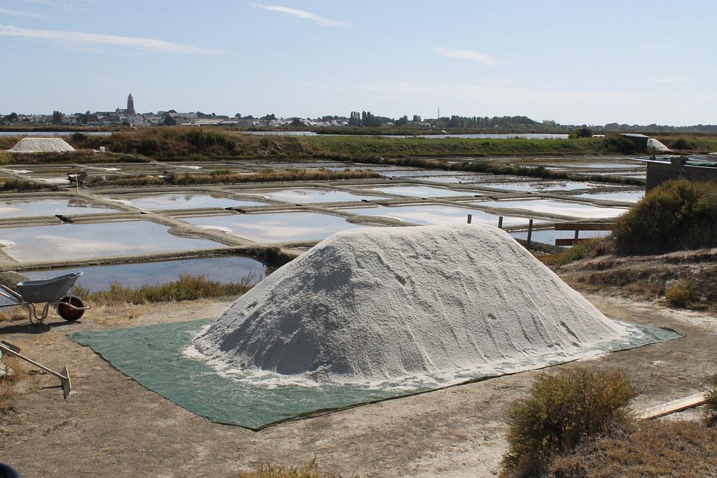 Coarse Salt harvest