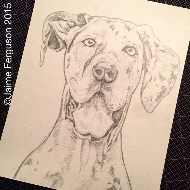 WIP Great Dane Portrait
