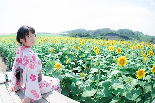 向日葵に咲く華