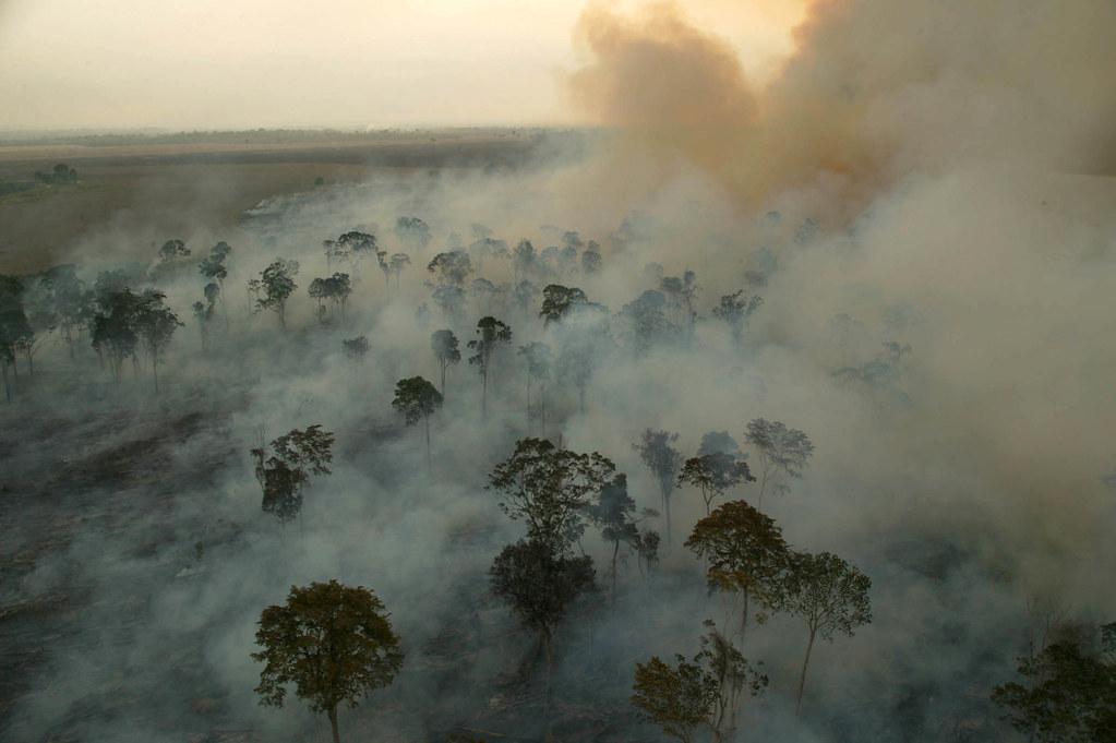 desmatamento-e-queimada1 (1).jpg