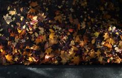Autumn in Seattle:  25th Avenue E., Montlake