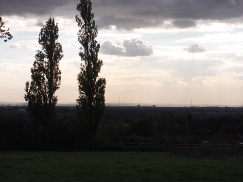 Poplars and the Thames Valley