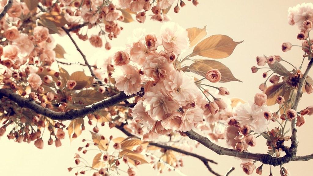 Photography Tumblr Vintage Flowersvintage Flower Wallpaper Flickr