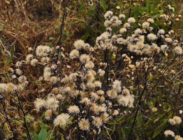 Meadow Garden (31)