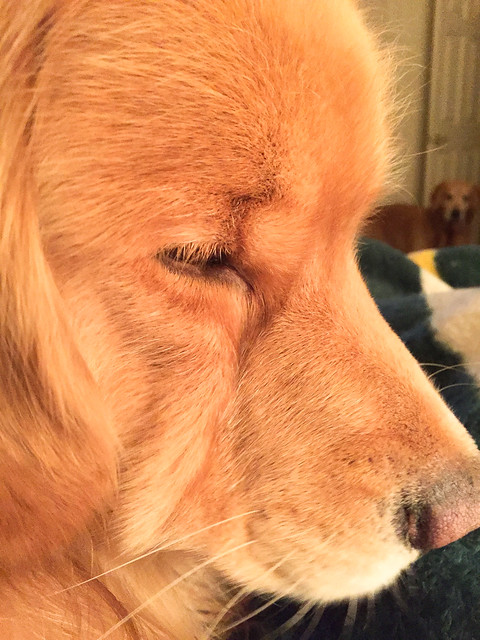 Sleepy Henry