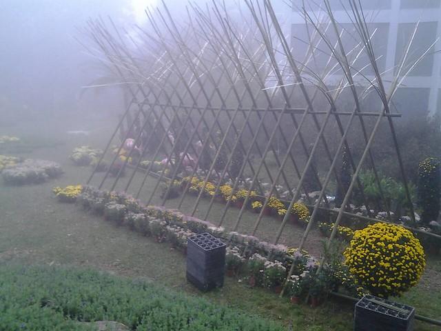 24469霧裡看花