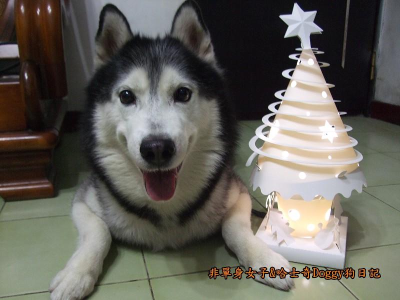 Doggy與紙箱王聖誕樹造型燈飾組11