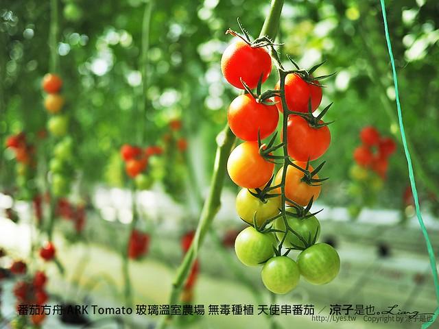 番茄方舟 ARK Tomato 玻璃溫室農場 無毒種植 天使串番茄 31