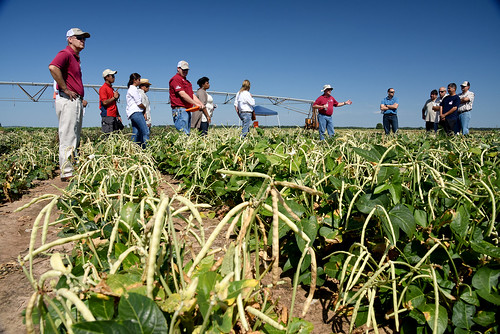 Southern Pea Field Day