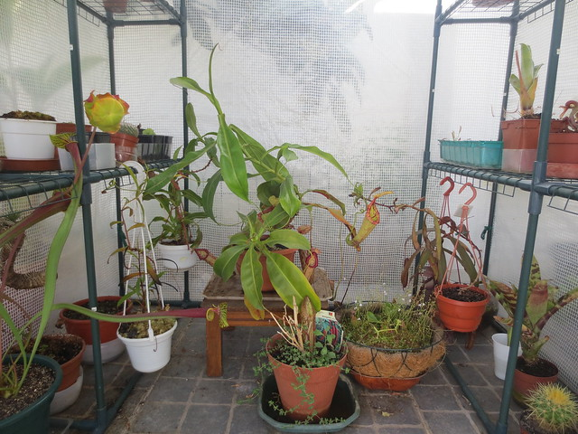 Plantas.werds.2012-2013 - Página 8 20654292914_986acd5317_z