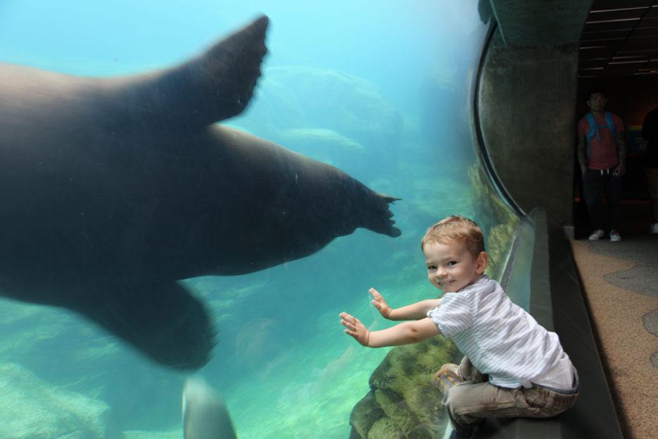 070915_aquarium09