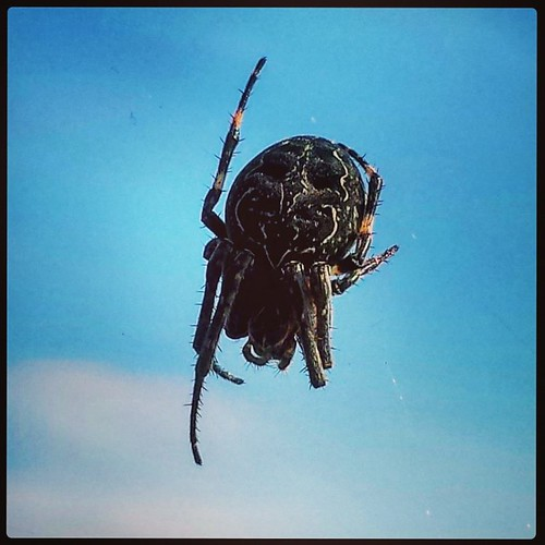 Spider IV. I left this guy alone after this. Hey? Why bother him? Spider's gotta eat, yo. #spider #arachnid
