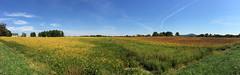 Maryland Farmland Panorama