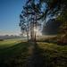 Sweet morning by CeDeCe Claudia Diem-Cecchinato
