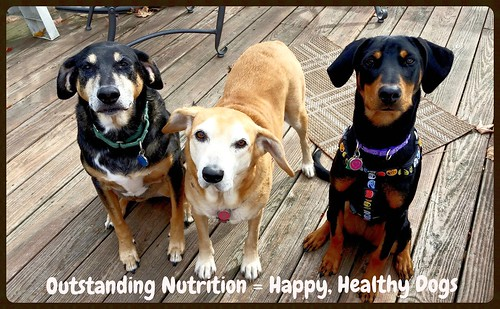 #sponsored #ProPlanDog #SavorShreddedBlend Lapdog Creations Happy Healthy Dogs