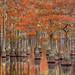 Cypress Garden by Exploring Light
