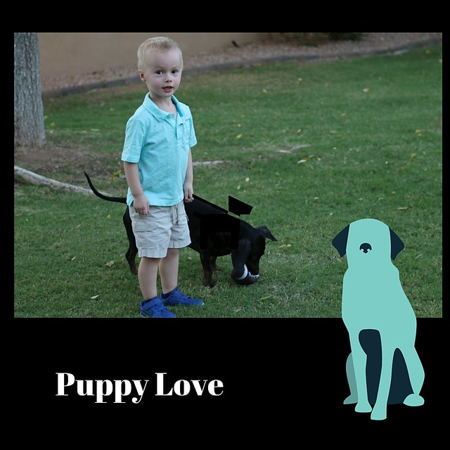 Rehearsal - Puppy Love