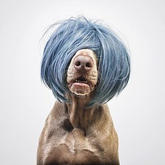 """Brego went to the hairdresser today'"" writes @frametheweim #dogsofinstagram #dog"