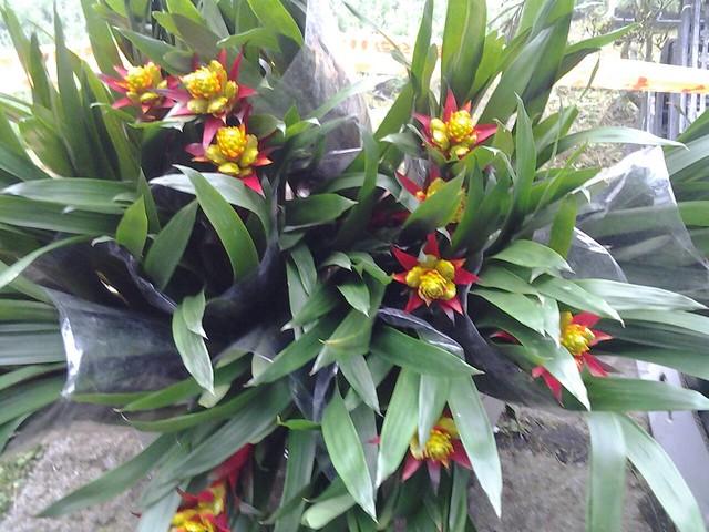 24516漂亮的花